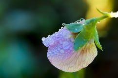 Raindrops na kwiacie Obraz Stock