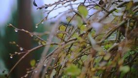 Raindrops na liściach i kwiatach zbiory wideo