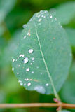 raindrops na liściu Fotografia Stock