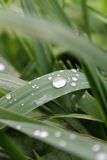 Raindrops na ostrzach trawa Zdjęcia Stock