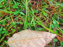 Raindrops na pojedynczym brudno- liściu offcenter w fotografii obraz royalty free