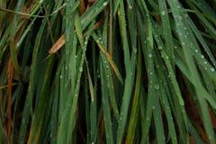Raindrops na trawa liściach Obrazy Royalty Free