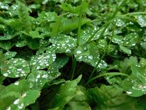 Raindrops na trawie Obraz Stock