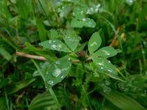 Raindrops na trawie Obrazy Stock