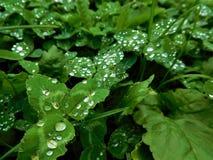 Raindrops na trawie Fotografia Stock