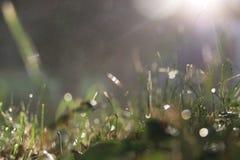 Raindrops na trawie po deszczu Zdjęcie Stock