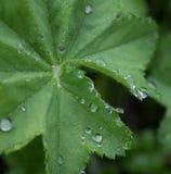 Raindrops na zielonym lata ulistnieniu Fotografia Stock