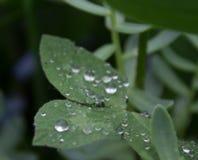 Raindrops na zielonym lata ulistnieniu Zdjęcia Stock