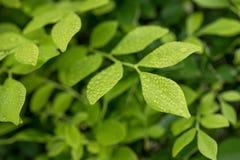 Raindrops na zmiennik zieleni liści wzoru zakończeniu up zdjęcie stock