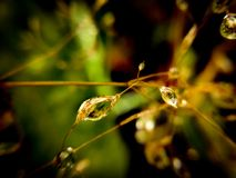 Free Raindrops On Thin Grass Stock Images - 126254544