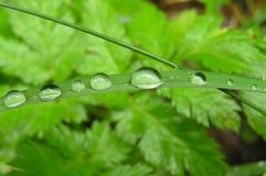Raindrops på en leaf Arkivbild