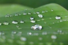 Raindrops på en leaf Royaltyfria Bilder