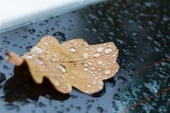 Raindrops på leafen royaltyfria foton