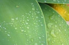 Raindrops på leaves Royaltyfria Foton