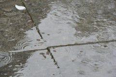 Raindrops on patio royalty free stock image