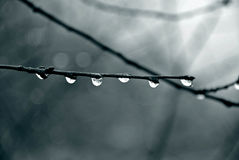 Raindrops Royalty Free Stock Image