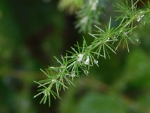 Raindrops on plants stock photos