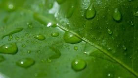 Raindrops, rosa krople na świeżym zielonym liściu/ obraz stock