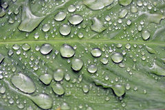 Raindrops shining on the green leaf Royalty Free Stock Images