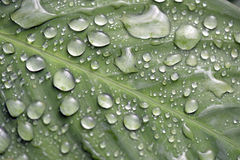 Raindrops shining on the green leaf Stock Photography