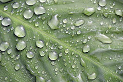 Raindrops shining on the green leaf Royalty Free Stock Photography