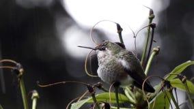 Raindrops sit on beak and back of small hummingbird