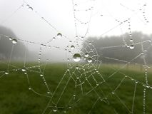 Raindrops in a Spiderweb Royalty Free Stock Photos