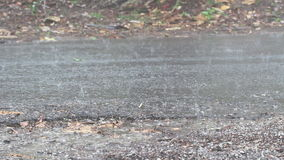 Raindrops on street stock video footage