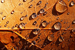 Raindrops on the surface of autumn leaf Stock Photos