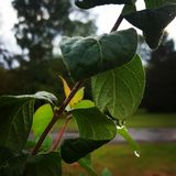 raindrops image stock