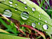 Raindrops w liściu fotografia stock