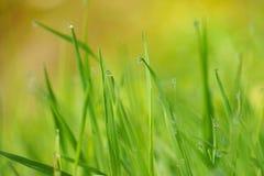 Raindrops w zielonej rośliny trawie zdjęcia stock