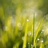 Raindrops w zielonej rośliny trawie obrazy stock