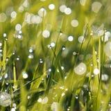 Raindrops w zielonej rośliny trawie obraz royalty free