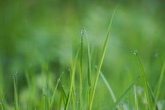 Raindrops w zielonej rośliny trawie obraz stock