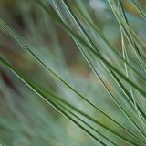 Raindrops w zielonej rośliny trawie zdjęcie stock