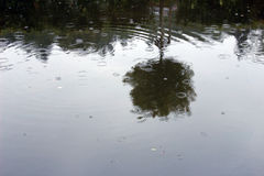 Raindrops on a water surface Royalty Free Stock Images