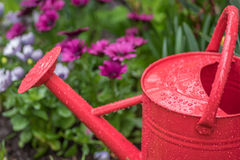 Raindrops on watering can in garden Royalty Free Stock Photography
