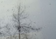Raindrops on Window with a Tree Outside in the Background royalty free stock photo