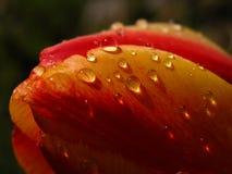raindropssolskenthrogh Arkivfoto