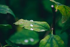 Rain drops on leaf after rain Stock Photos