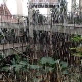 rainfall Obraz Royalty Free