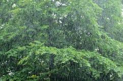 rainfall Fotografia Stock