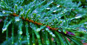 Rainfall Royalty Free Stock Photos