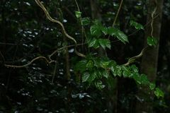 Rainfall on green foliage in the forest. Rainfall falls on green foliage in the forest Stock Image