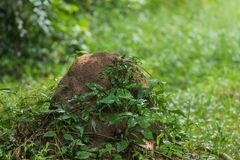 Rainfall on green foliage in the forest. Rainfall falls on green foliage in the forest Royalty Free Stock Photo