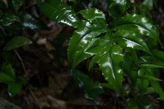 Rainfall on green foliage in the forest. Rainfall falls on green foliage in the forest Stock Photography