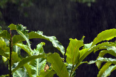 Rainforest Rainfall Royalty Free Stock Photo