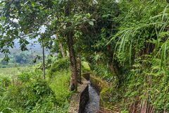 Rainfall in the mountains of Indonesia. Bali island Stock Photos
