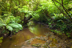 Rainforest Stock Images
